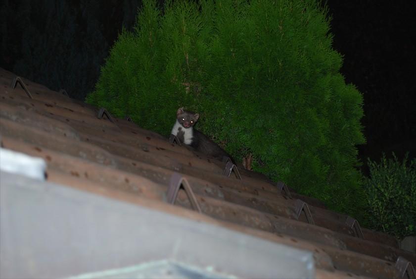 naprawa dachu śląsk